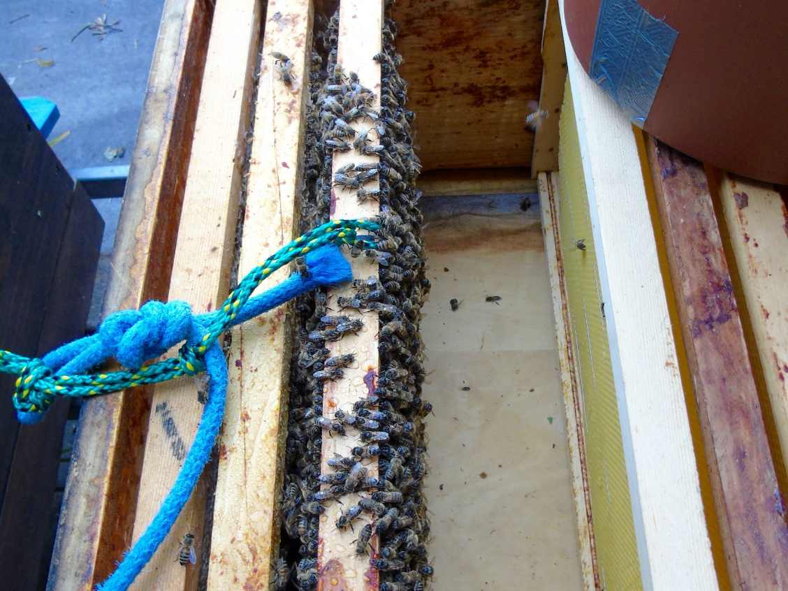 Schwarmfalle | Welt der Bienen